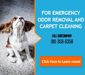 Pet Stain Removal - Carpet Cleaning Carson, CA